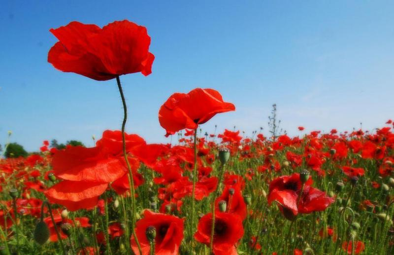 Remembrance Events and Services 2020 (9-11th November)